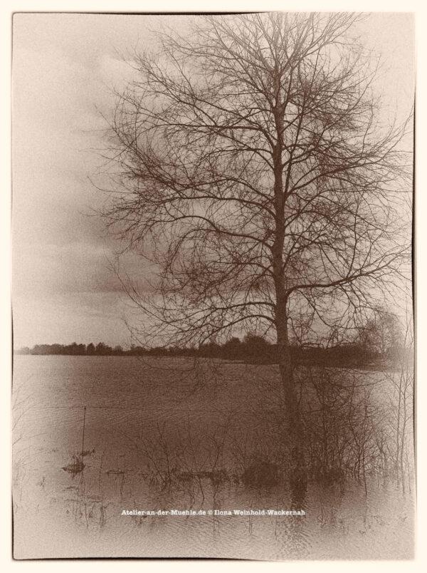 Traumwald Numero 2 © 2011 Ilona Weinhold-Wackernah - 000778