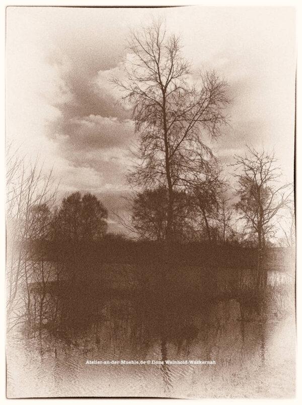 Traumwald Numero 3 © 2011 Ilona Weinhold-Wackernah - 000779