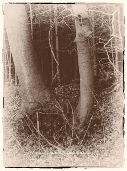 Traumwald Numero 5 © 2011 Ilona Weinhold-Wackernah - 000780