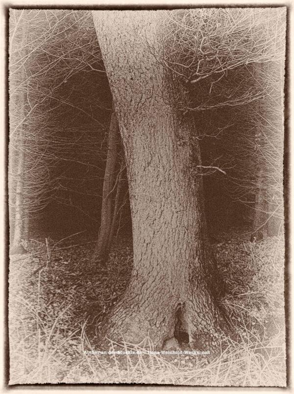 Traumwald Numero 6 © 2011 Ilona Weinhold-Wackernah - 000781