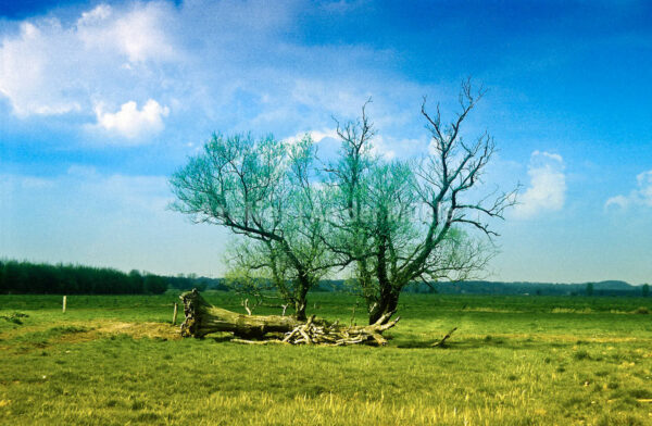 Bad Bederkesa Baum © Im Moor © 2006 Ilona Weinhold-Wackernah (VG Bild-Kunst Nr.- 2218881) - 000717.jpg