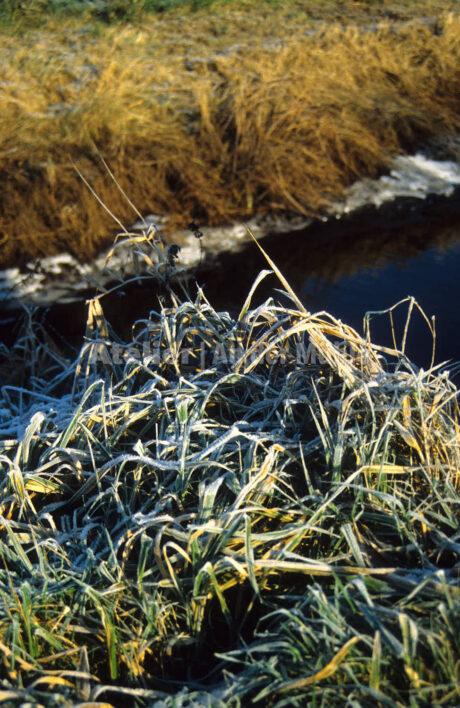 Bad Bederkesa Moorgraben mit Schnee @ Im Moor © 2005 Ilona Weinhold-Wackernah (VG Bild-Kunst Nr.- 2218881) - 000710.jpg