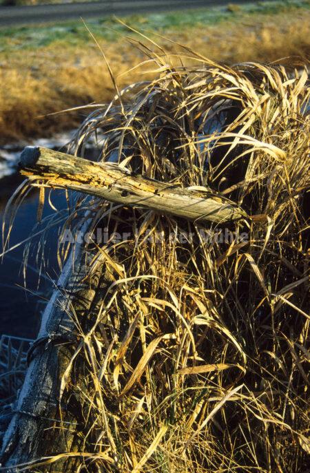 Bad Bederkesa Moorlandschaft @ Im Moor © 2005 Ilona Weinhold-Wackernah (VG Bild-Kunst Nr.- 2218881) - 000708.jpg