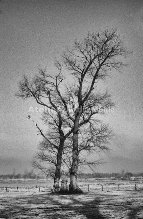 Bad Bederkesa Moorwiesen 1 @ Im Moor © 2009 Ilona Weinhold-Wackernah (VG Bild-Kunst Nr.- 2218881) - 000712.jpg