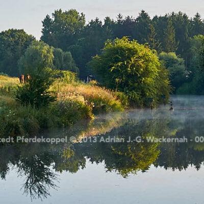 Loxstedt Pferdekoppel © 2013 Adrian J.-G. Wackernah