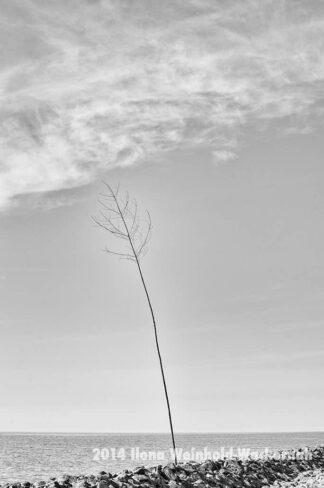 Fotografie Wremen Pricke © 2014 Ilona Weinhold-Wackernah