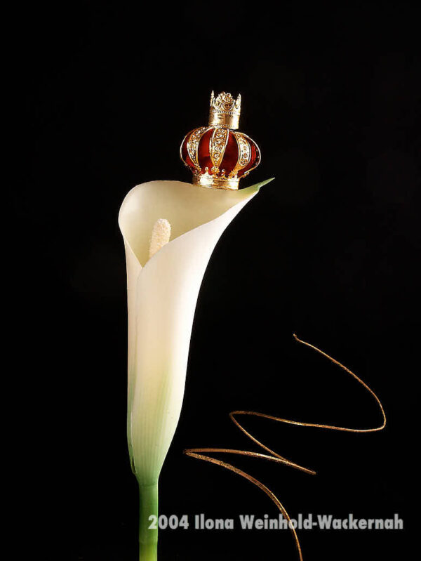 Fotografie ZauberCalla Blütenkönigin © 2004 Ilona Weinhold-Wackernah