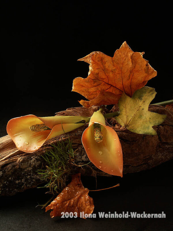 Fotografie ZauberCalla Herbststimmung © 2003 Ilona Weinhold-Wackernah