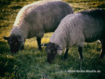 Zwei Schafe © Ilona Weinhold-Wackernah (VG Bild-Kunst Nr.: 2218881) - https://atelier-an-der-muehle.de