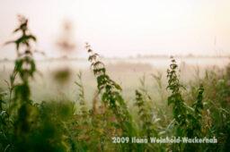 Fotografie Bramel Brenn-Nessel-Nebel © 2009 Ilona Weinhold-Wackernah