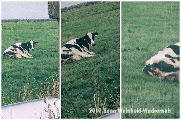 Fotografie Bramel Drei-Teil-Kuh © 2010 Ilona Weinhold-Wackernah