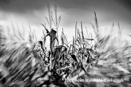 Fotografie Bramel Dynamik 01 © 2013 Ilona Weinhold-Wackernah