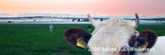 Fotografie Bramel Geesteniederung im Nebel © 2009 Adrian J.-G. Wackernah