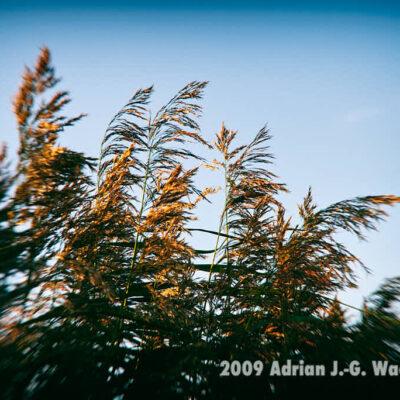 Fotografie Bramel Soft-Focus-Blue © 2009 Adrian J.-G. Wackernah