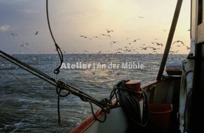 Fotografie Dorum Die Garnele und das Meer © 2004 Ilona Weinhold-Wackernah - 000415