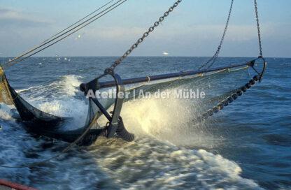 Fotografie Dorum Die Garnele und das Meer © 2004 Ilona Weinhold-Wackernah - 000417