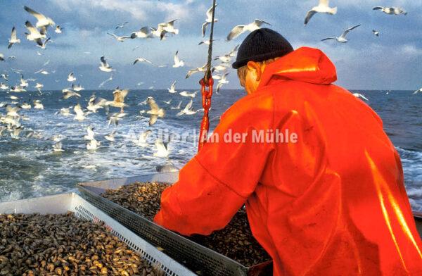 Fotografie Dorum Die Garnele und das Meer © 2004 Ilona Weinhold-Wackernah - 000429