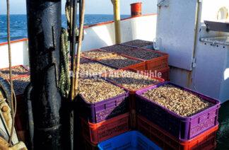 Fotografie Dorum Die Garnele und das Meer © 2004 Ilona Weinhold-Wackernah - 000432