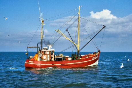 Produktbild Fotografie Dorum Die Garnele und das Meer © 2004 Ilona Weinhold-Wackernah - 000435
