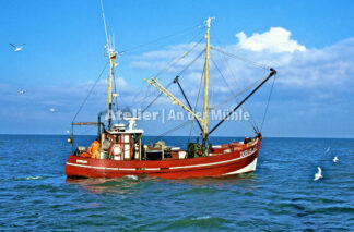 Fotografie Dorum Die Garnele und das Meer © 2004 Ilona Weinhold-Wackernah - 000435