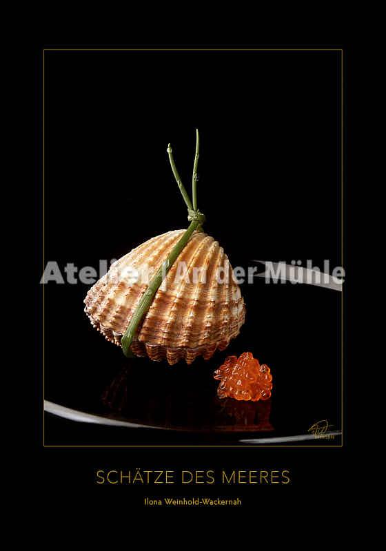 Fotografie Schätze des Meeres Acanthocardia Tuberculata © 2003 Ilona Weinhold-Wackernah - 000855