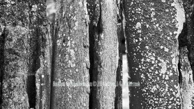 Fotografie Borkum Walknochenzaun © 2014 Adrian J.-G. Wackernah - 001052
