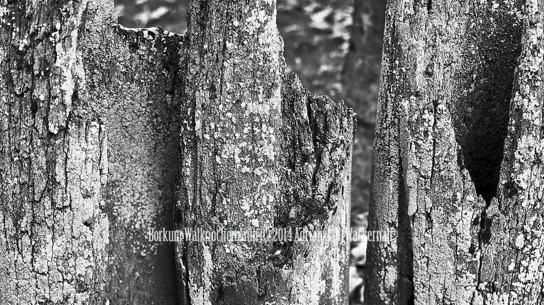 Fotografie Borkum Walknochenzaun © 2014 Adrian J.-G. Wackernah - 001104