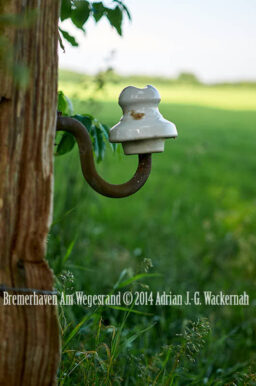 Fotografie Bremerhaven Am Wegesrand © 2014 Adrian J.-G. Wackernah - 001068