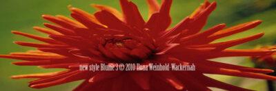 Fotografie new style Blume 3 © 2010 Ilona Weinhold-Wackernah - 000864
