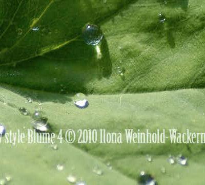 Fotografie new style Blume 4 © 2010 Ilona Weinhold-Wackernah (VG Bild-Kunst Nr.- 2218881) - 000865