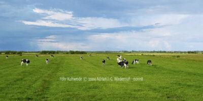 Fotografie Föhr Kuhweide © 2004 Adrian J.-G. Wackernah - 001118