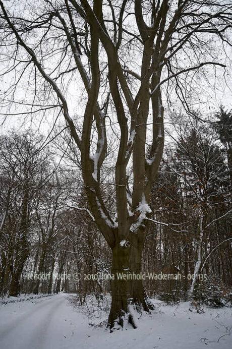 Fotografie Frelsdorf Buche © 2010 Ilona Weinhold-Wackernah - 001135