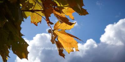 Fotografie Frelsdorf Herbst © 2009 Adrian J.-G. Wackernah - 001126