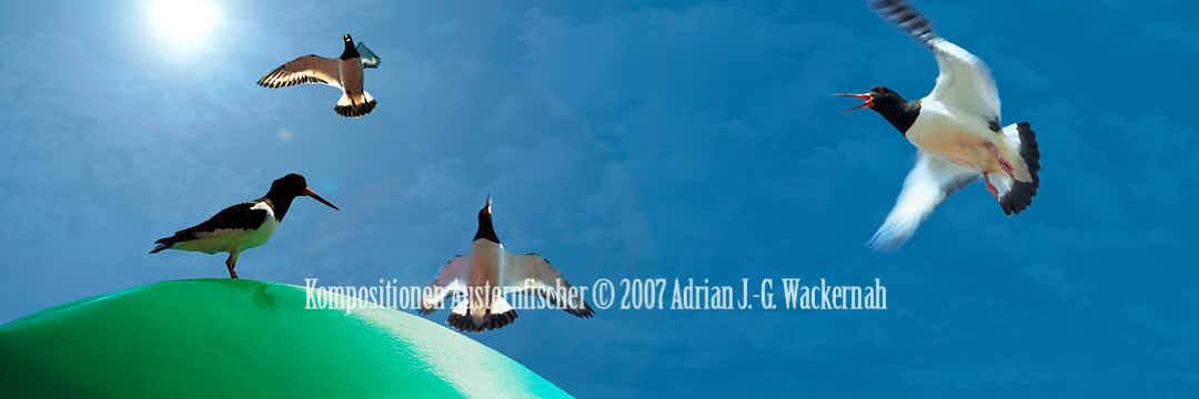 Fotografie Kompositionen Austernfischer © 2018 Adrian J.-G. Wackernah - 001046