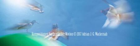Fotografie Kompositionen Austernfischer Motion © 2018 Adrian J.-G. Wackernah - 001047