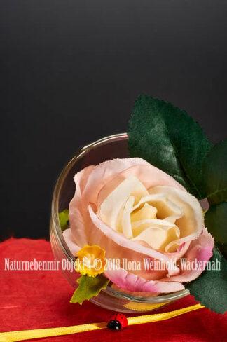 Fotografie Naturnebenmir Objekt 4 © 2018 Ilona Weinhold-Wackernah - 001089