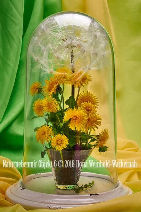 Fotografie Naturnebenmir Objekt 6 © 2018 Ilona Weinhold-Wackernah - 001091