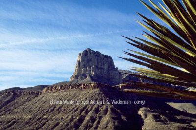 Fotografie El Paso Wüste © 1981 Adrian J.-G. Wackernah - 001151