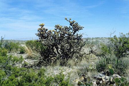 Fotografie El Paso Wüste © 1981 Adrian J.-G. Wackernah - 001152