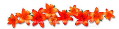 new style Fotografie Farbrausch orange © 2012 Ilona Weinhold-Wackernah - 000395