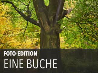 Edition 13 – Eine Buche