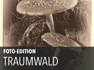 Edition 10 – Traumwald