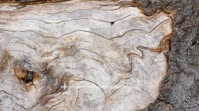 Fotografie Meyenburg Baum © 2008 Ilona Weinhold-Wackernah - 001203
