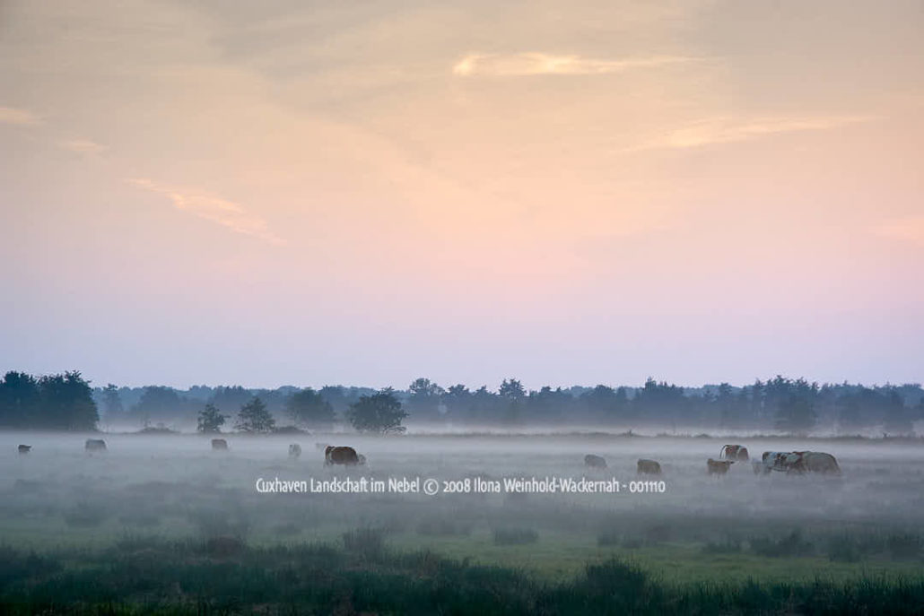 Produktbild Cuxhaven Landschaft im Nebel © 2008 Ilona Weinhold-Wackernah - 001110