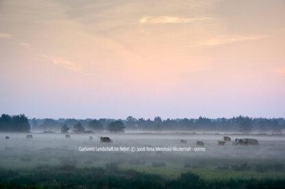 Produktbild Fotografie Cuxhaven Landschaft im Nebel © 2008 Ilona Weinhold-Wackernah - 001110