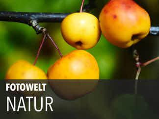 Fotowelt Natur