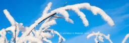 Produktbild Fotografie Loxstedt Zweige mit Schnee © 2010 Adrian J.-G. Wackernah - 001273