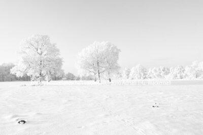 Produktbild 001325 Schneelandschaft Loxstedt © 2010 Adrian J.-G. Wackernah