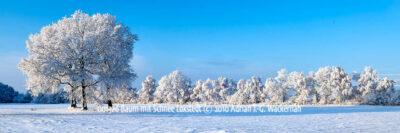 Produktbild 001326 Baum mit Schnee Loxstedt © 2010 Adrian J.-G. Wackernah