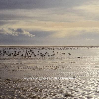 Produktbild 001417 Amrum © 2004 Ilona Weinhold-Wackernah